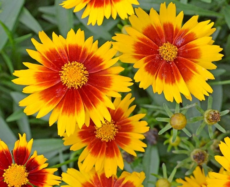Yellow and Red Flowers | Outside Productions International