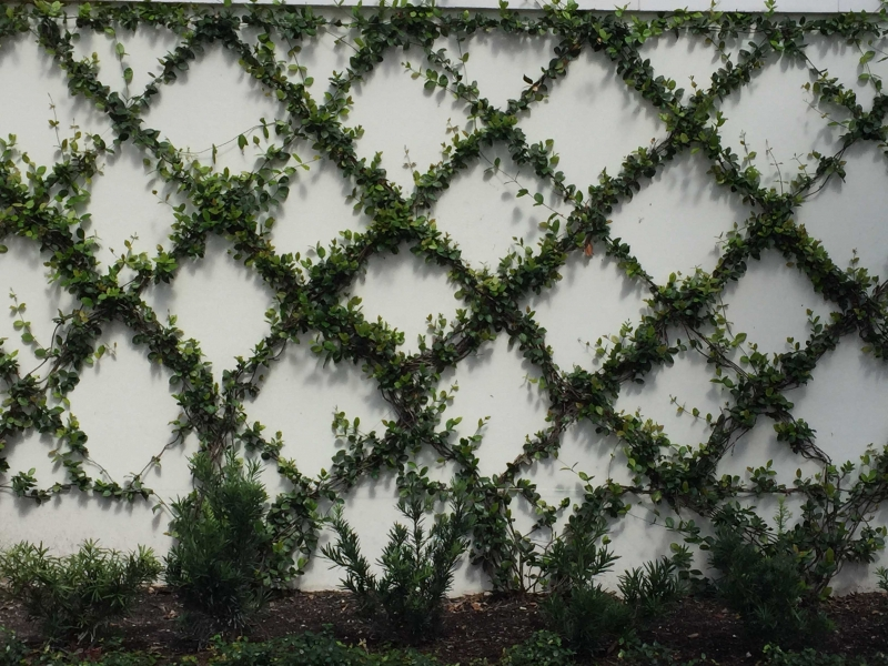 Wire Trellis System | Outside Productions International